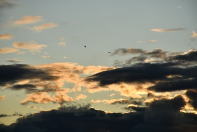 birds flying in the sky during golden hour cumulu teams background