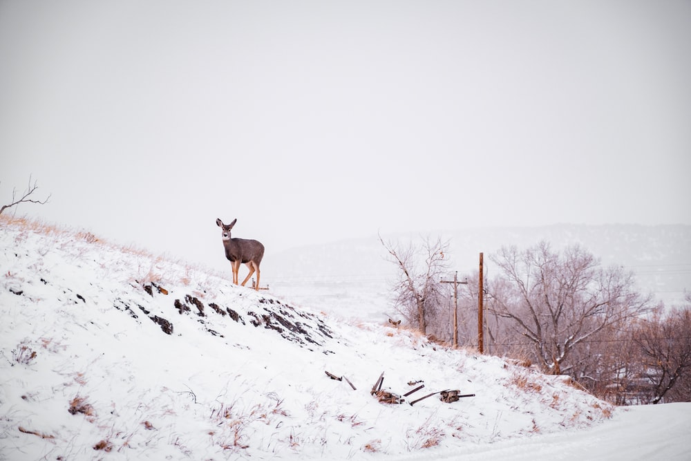 deer on top of a snow covered hill