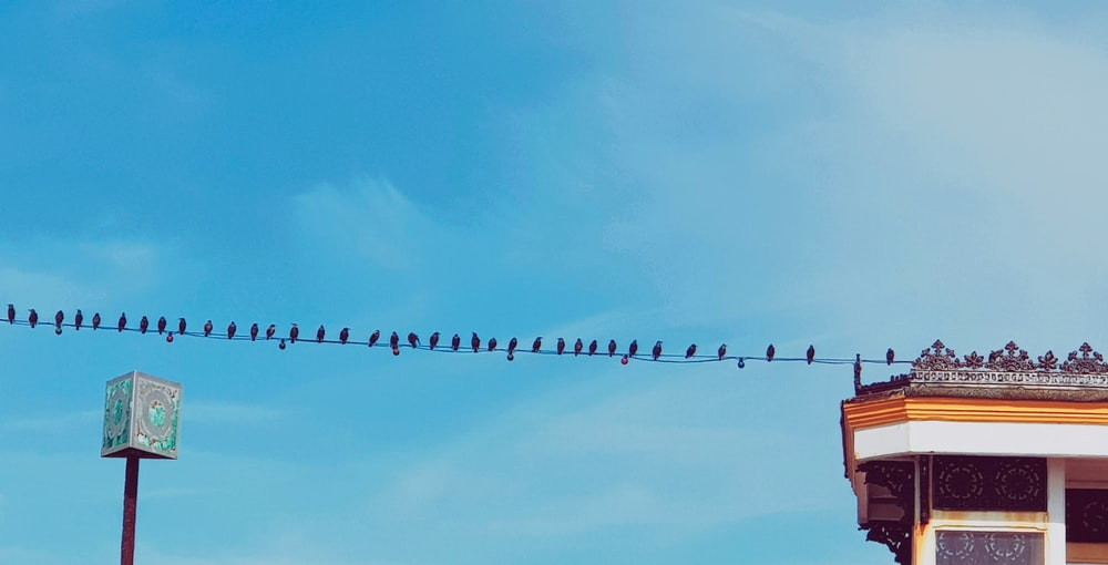 flock of birds on wire