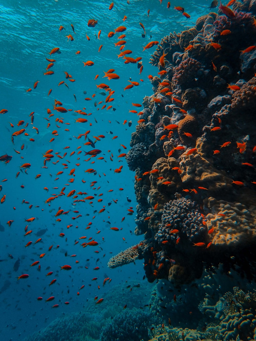 school of orange fish