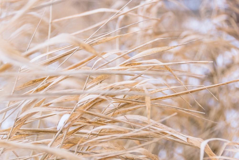 brown grass field photograph