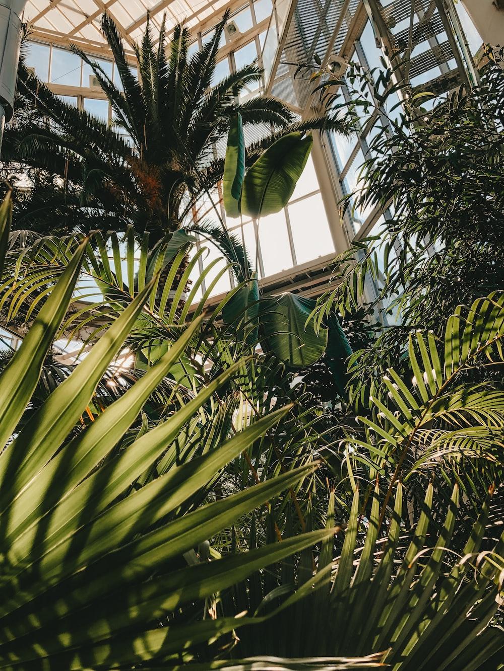 green banana tree near window