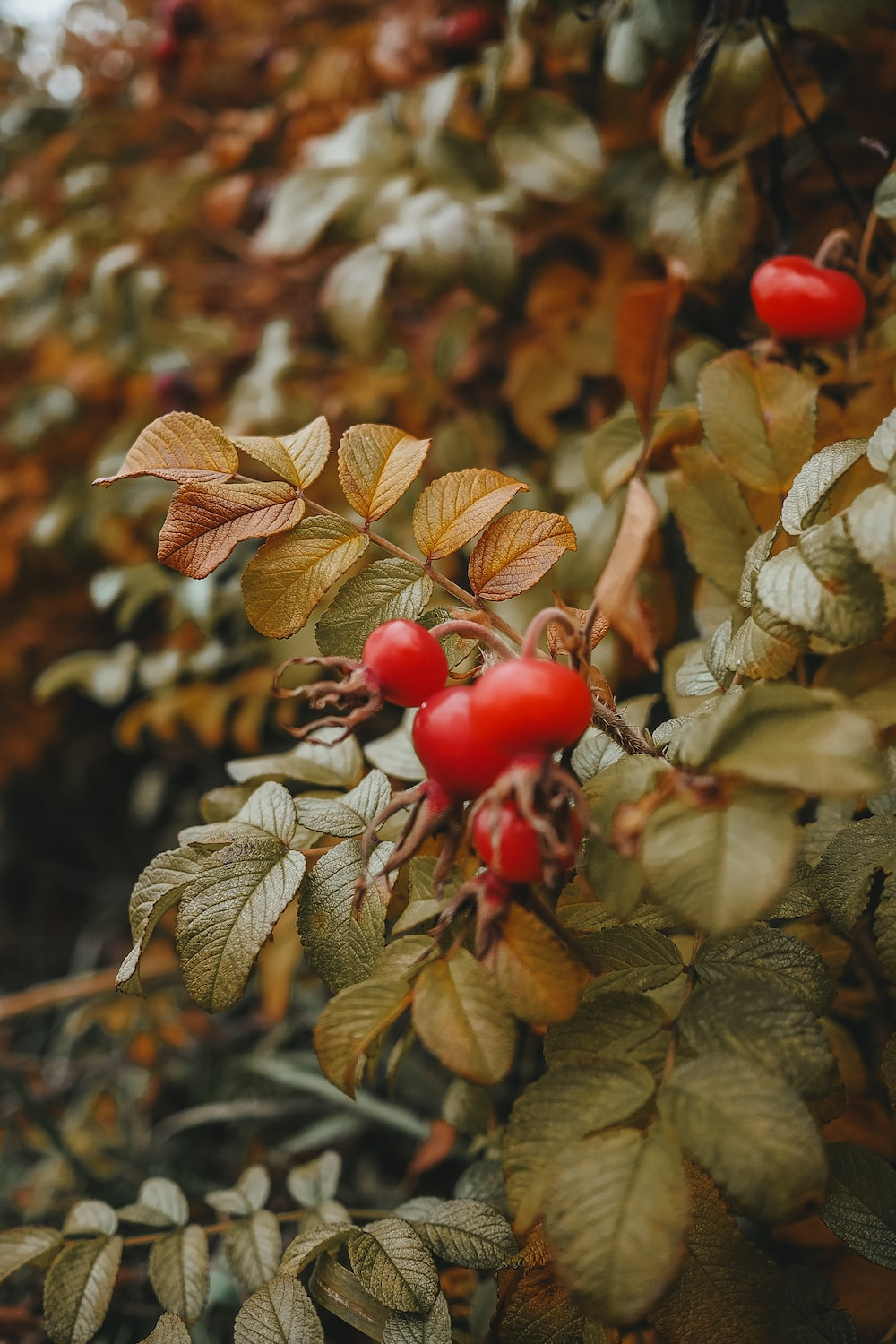 shallow focus photo of red fruits