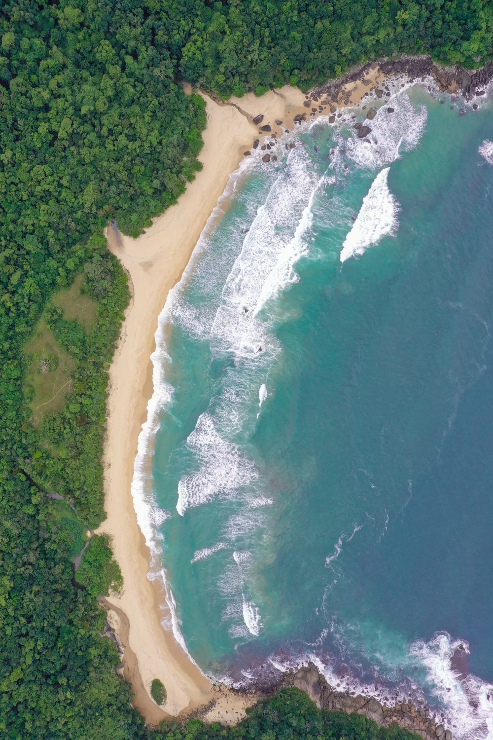 aerial view of seashore near trees during daytime