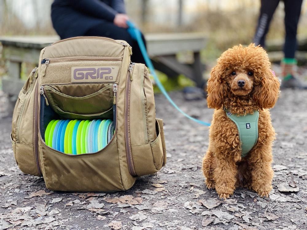 brown sitting dog beside open brown bag