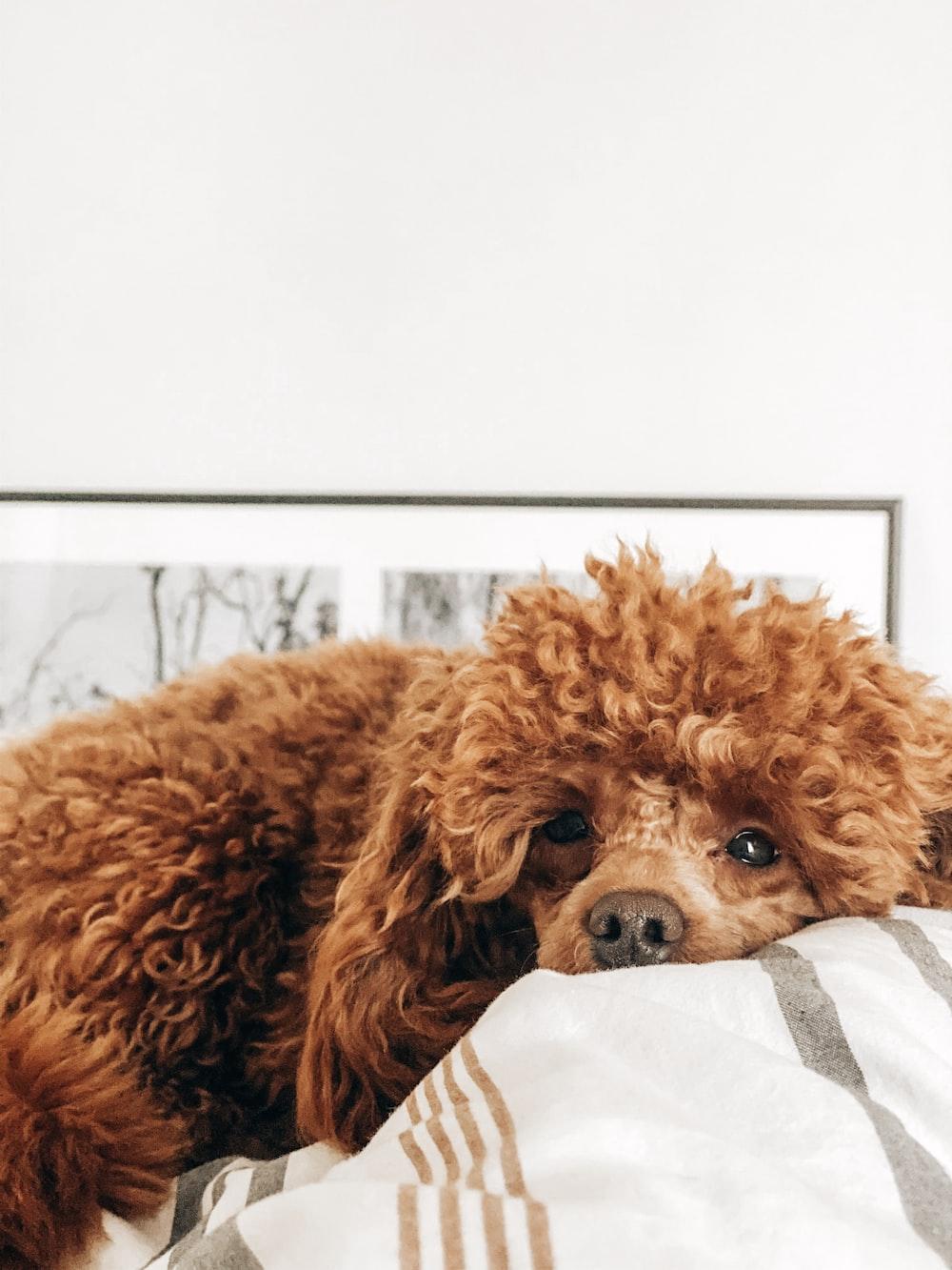 medium-coated brown dog