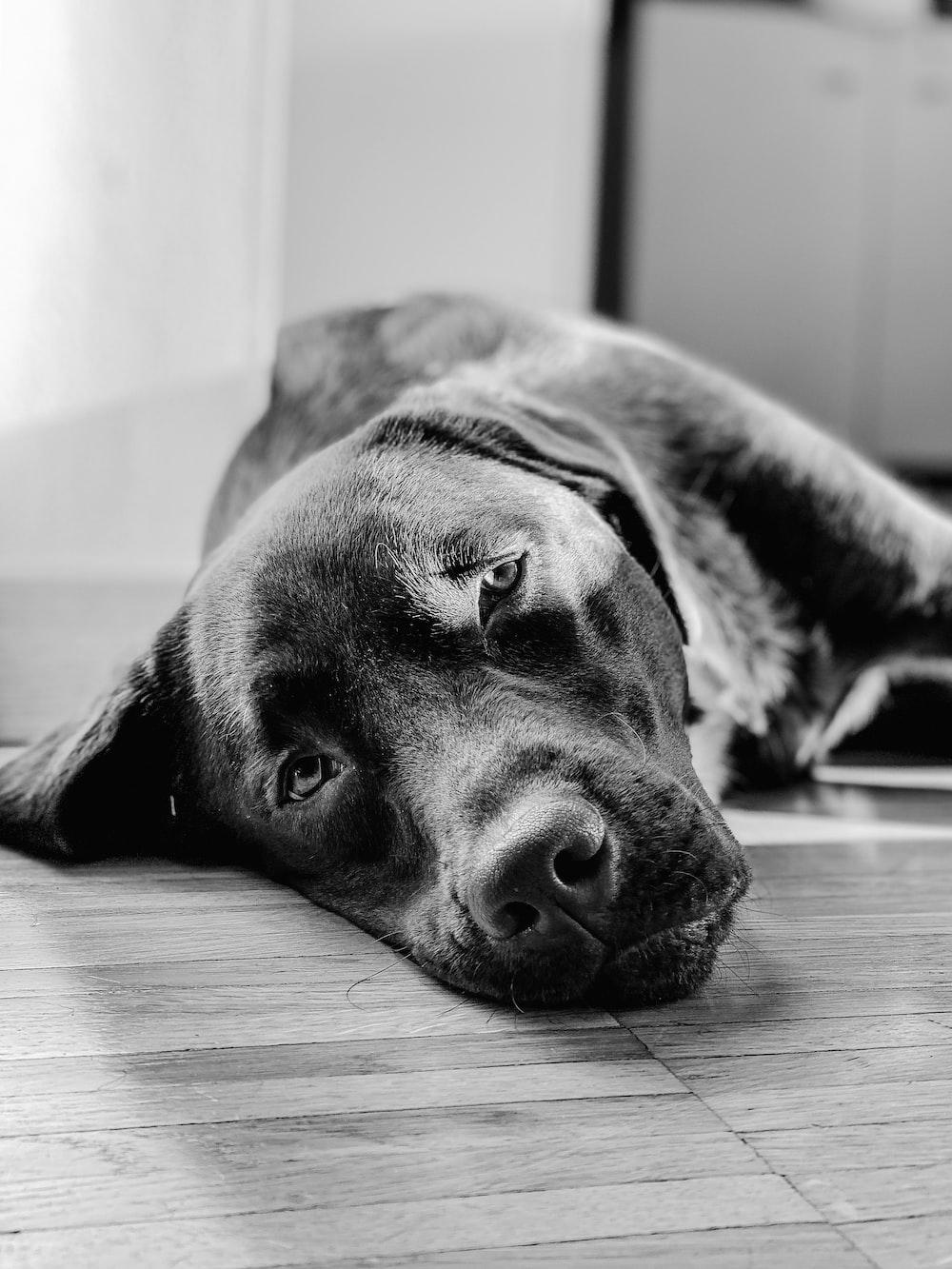 grayscalee photo of dog lying on floor