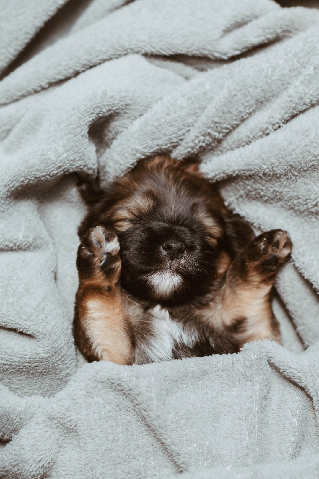 A puppy sleeping on a blanket. Full of love.