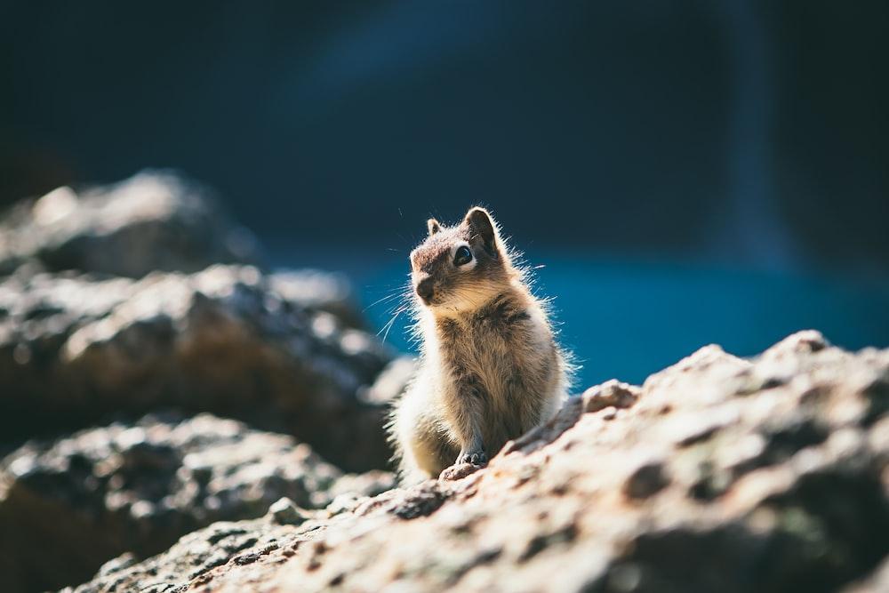 squirrel sitting on stone