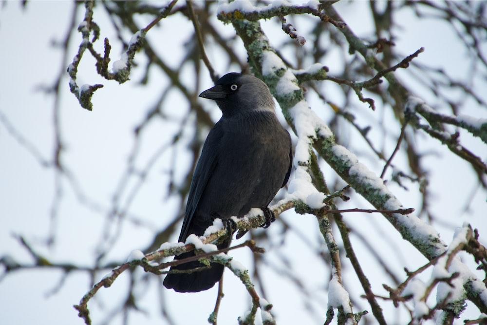 gray coated bird standing on tree branch