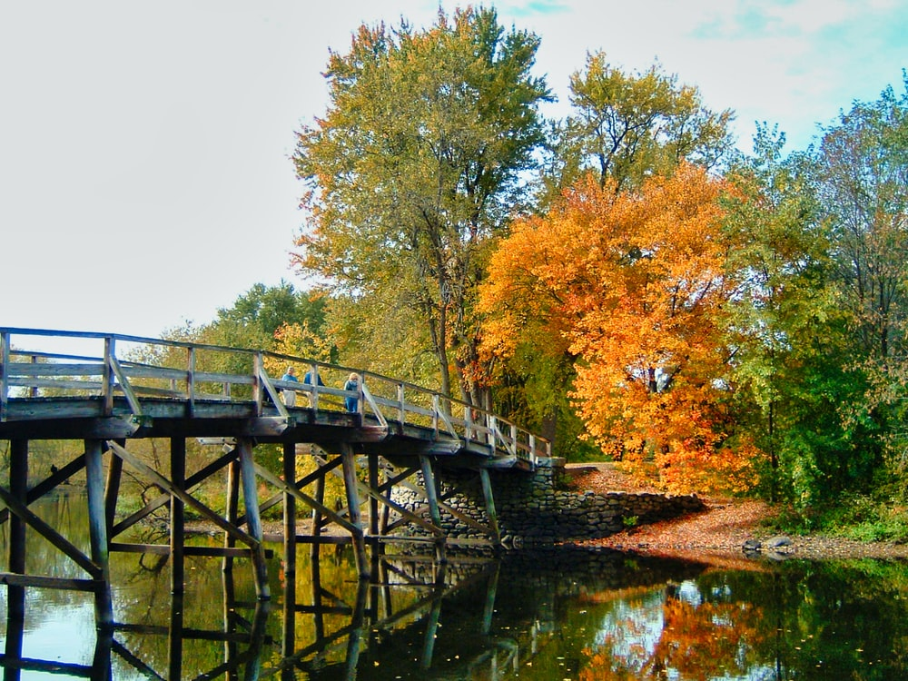 bridge near trees