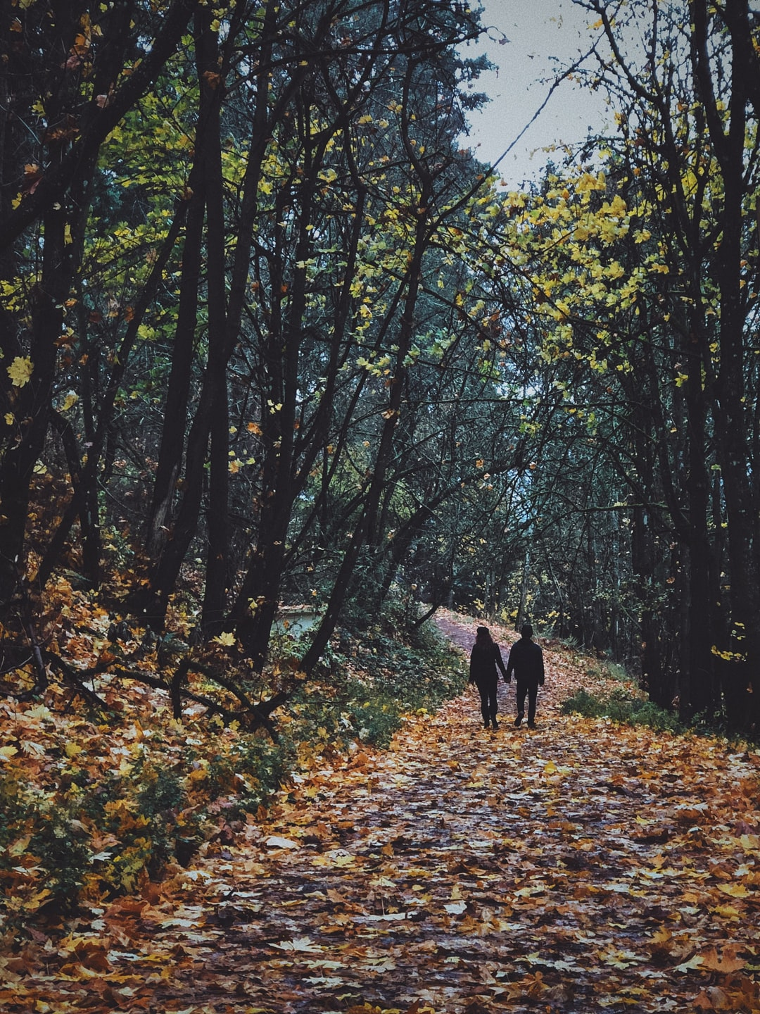 A loving couple holds hands and walks along a leave-covered trail in rainy Portland, Oregon.