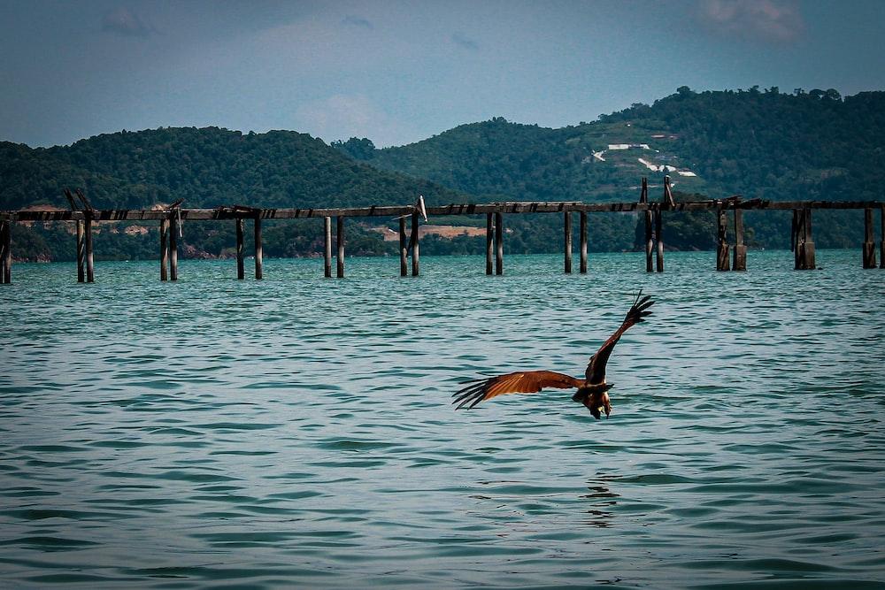 brown bird above ocean