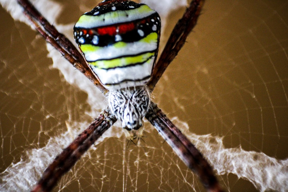 white, black, and yellow spider on web
