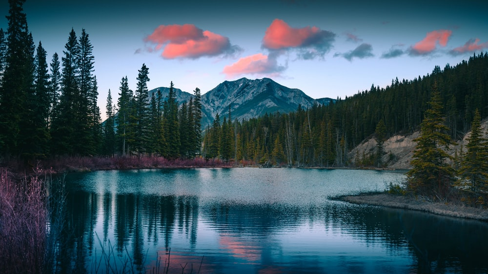 calm lake surrounded with trees near mountain at daytime
