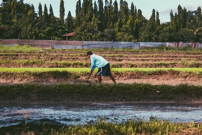 man farming on plant field