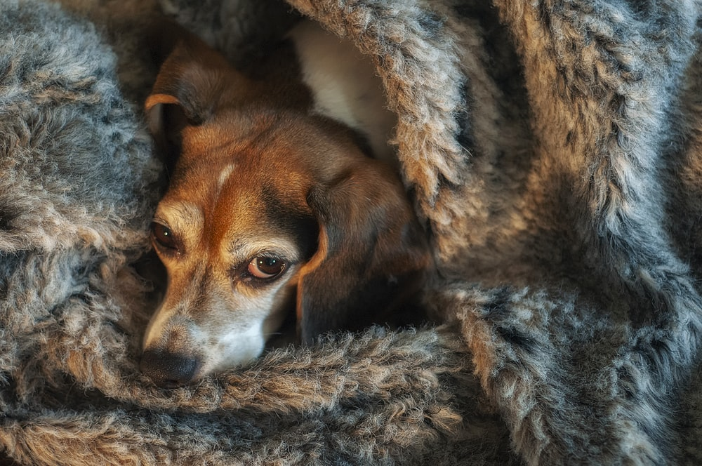 dog wrapped in gray fur textile
