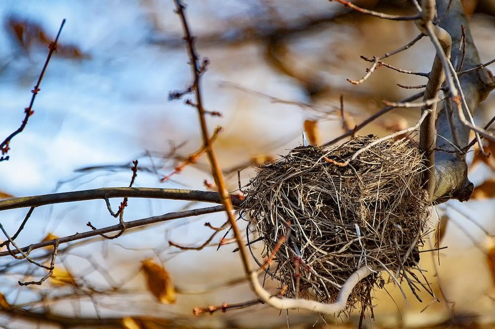 nest on tree