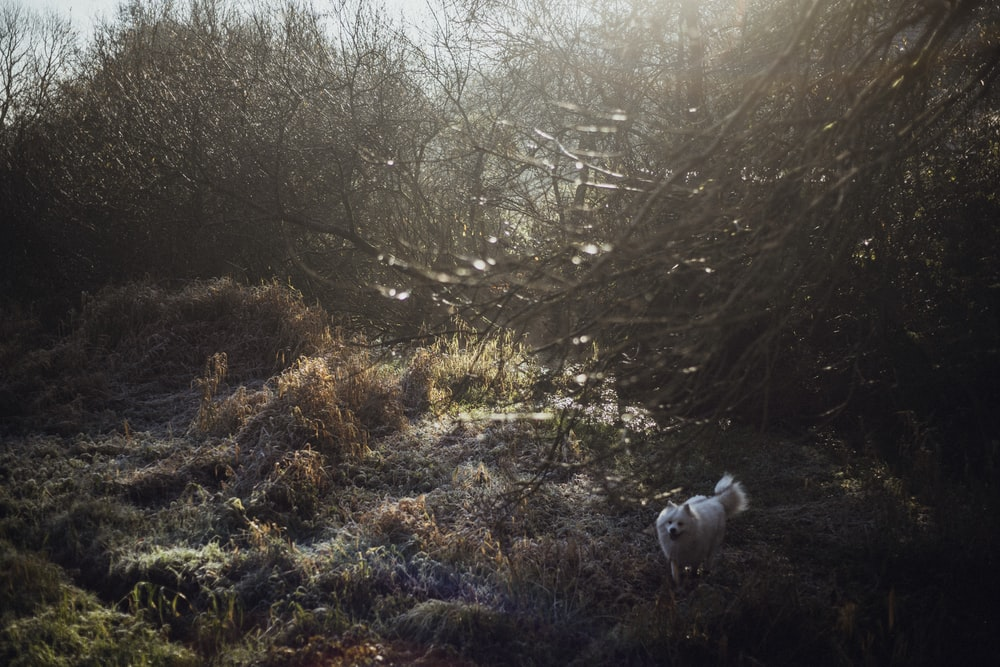 white dog standing in forest