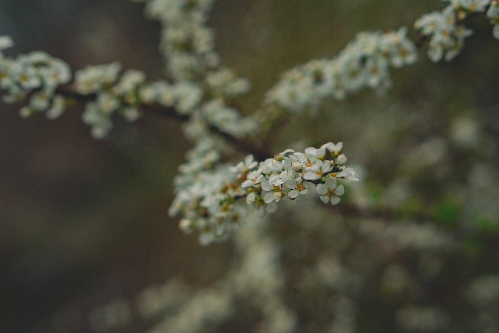 macro photography of white petaled flower