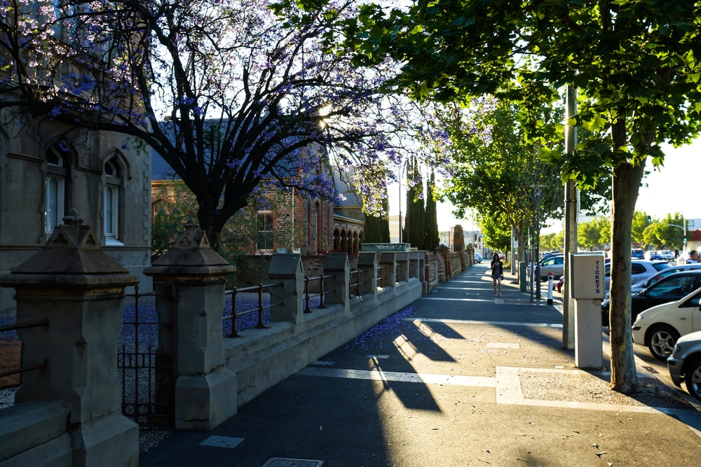 view photography of sidewalks between vehicles and houses during daytime