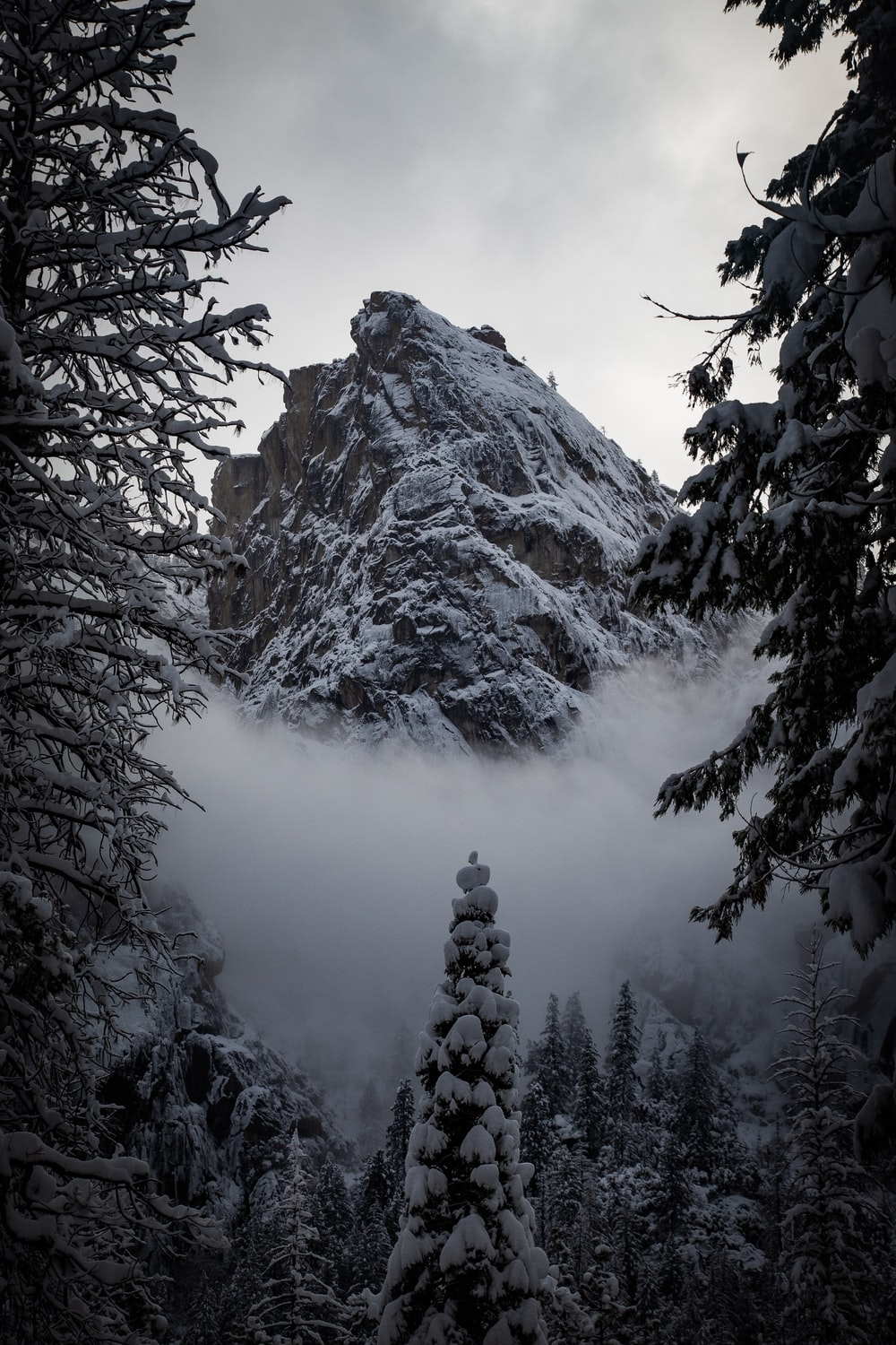 mountain and green trees covered with snow