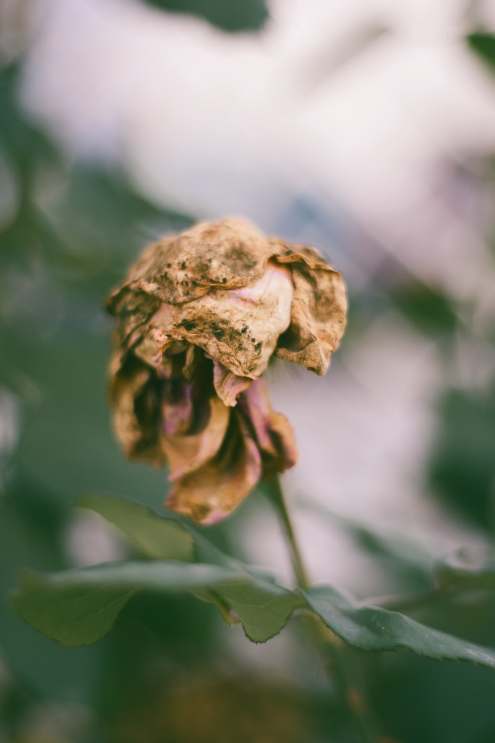 macro photography of brown flower