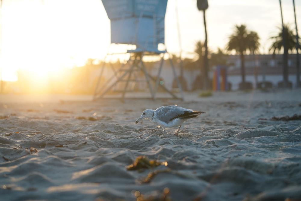 seagull bird on sand
