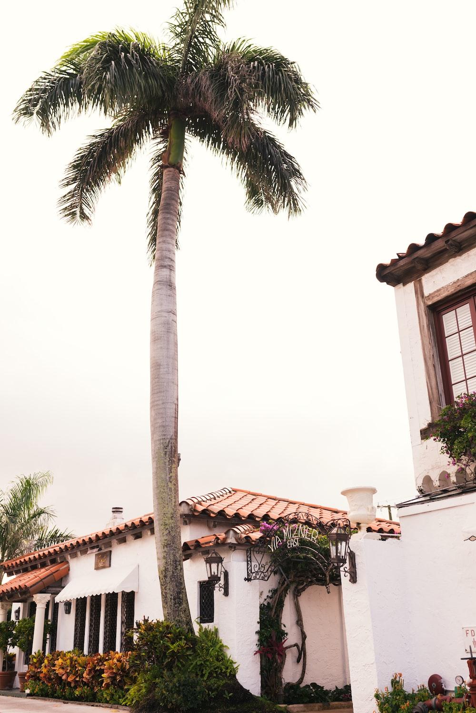 palm tree beside houses