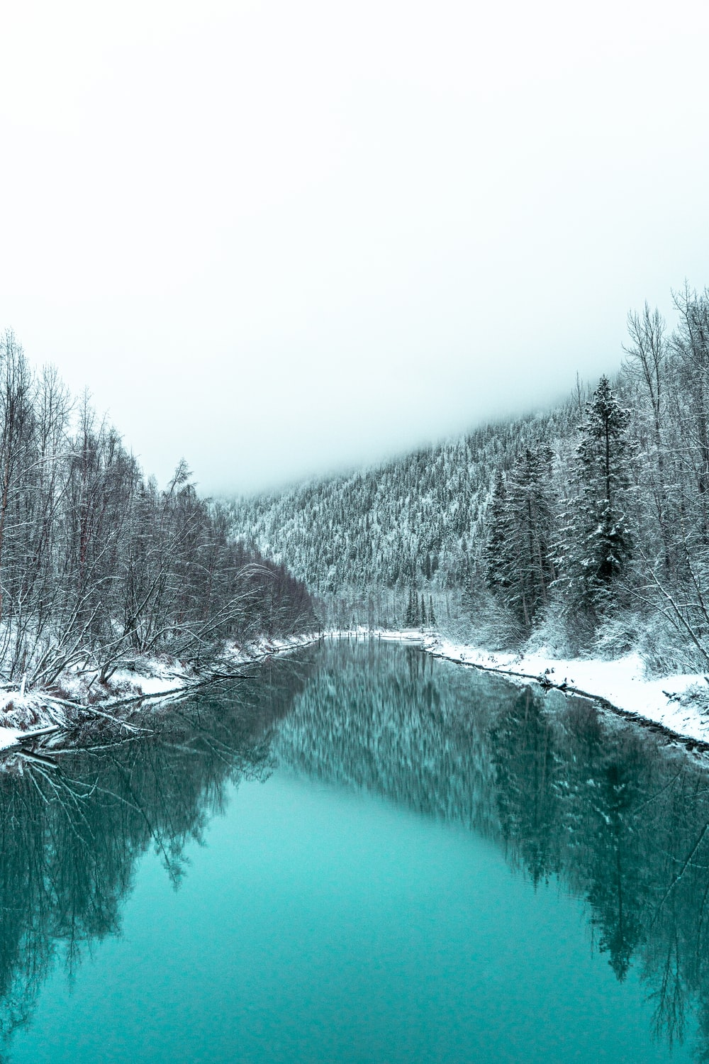 river in between snow-covered trees