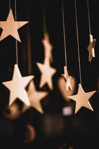 Dear Stars  loss stories