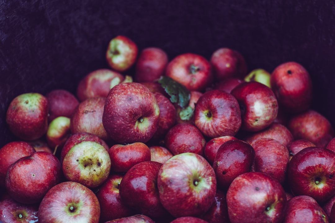 Fresh harvest bio apples – local organic produced & delivered – urban gardening. Made with Canon 5d Mark III and analog vintage lens, Leica Elmarit-R 2.8 90mm (Year: 1985)