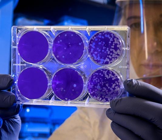antimicrobianos