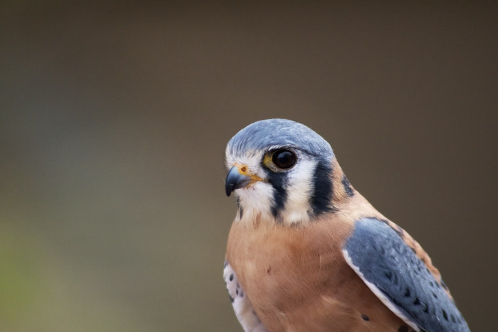 selective-focus photograph of blue and brown bird