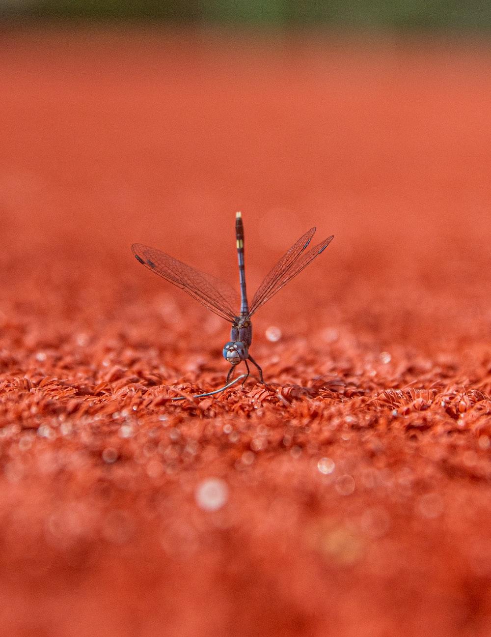 gray dragonfly