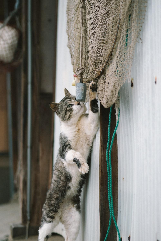 short-fur white and gray cat reaching brown mesh net
