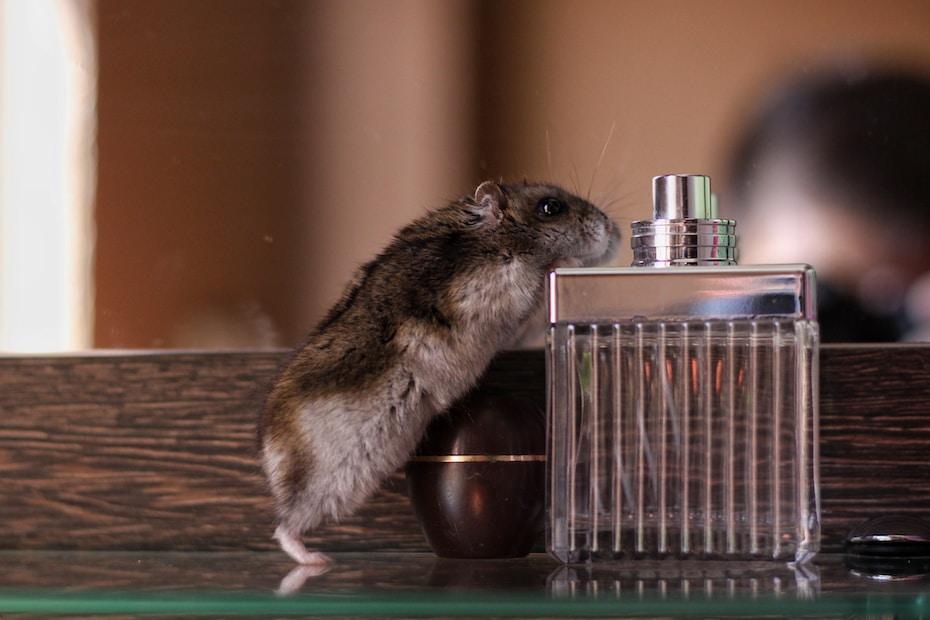 hamster met glazen flesje