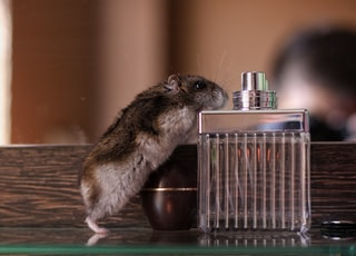brown and gray mice on fragrance bottle