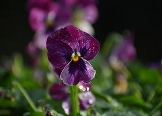 photo of purple Orchid flowers