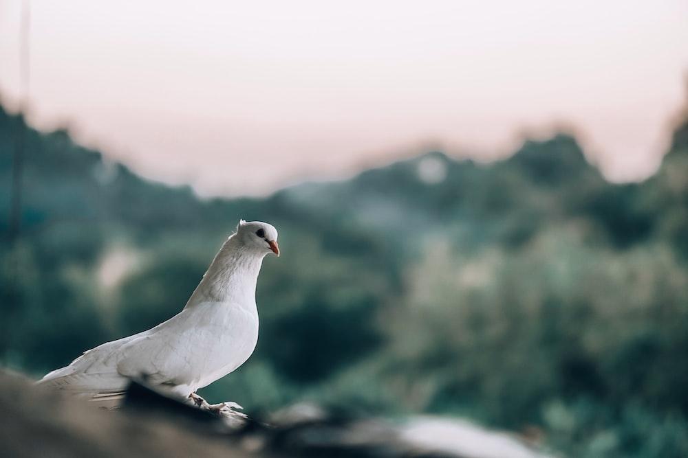 macro photography of white dove