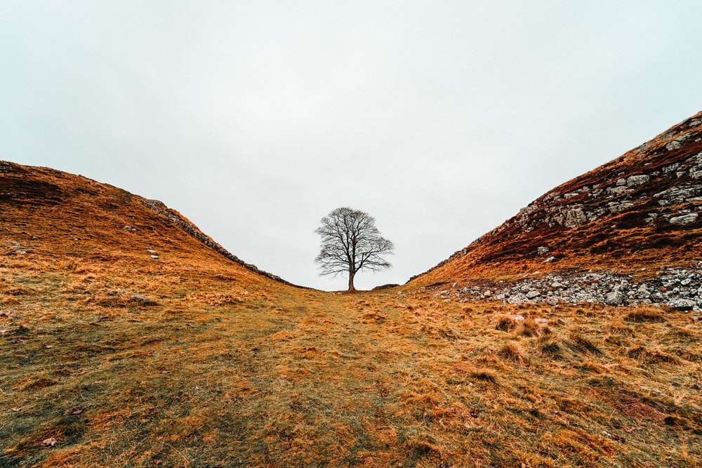 bare tree on hill