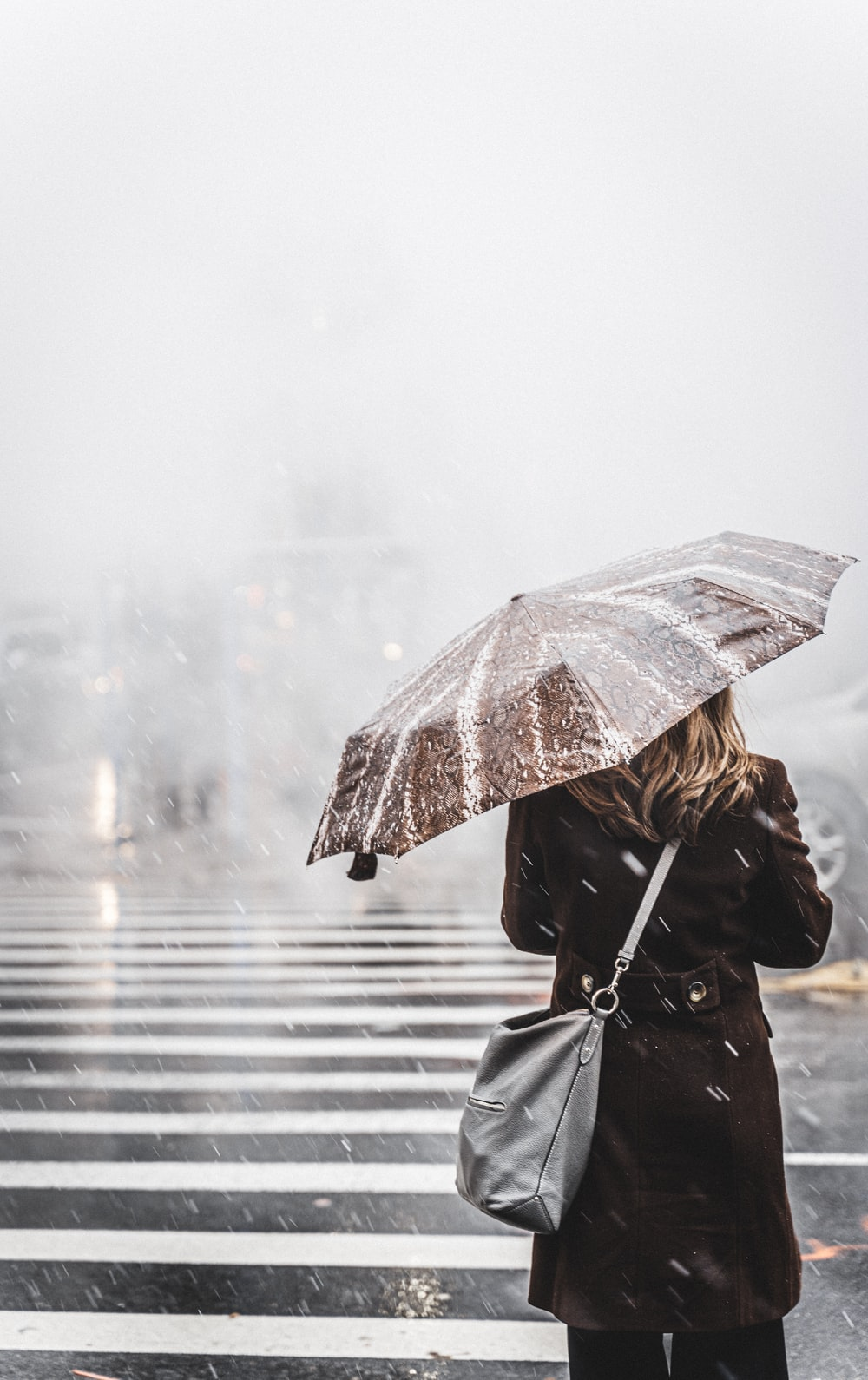 woman walking on pedestrian lane while holding umbrella