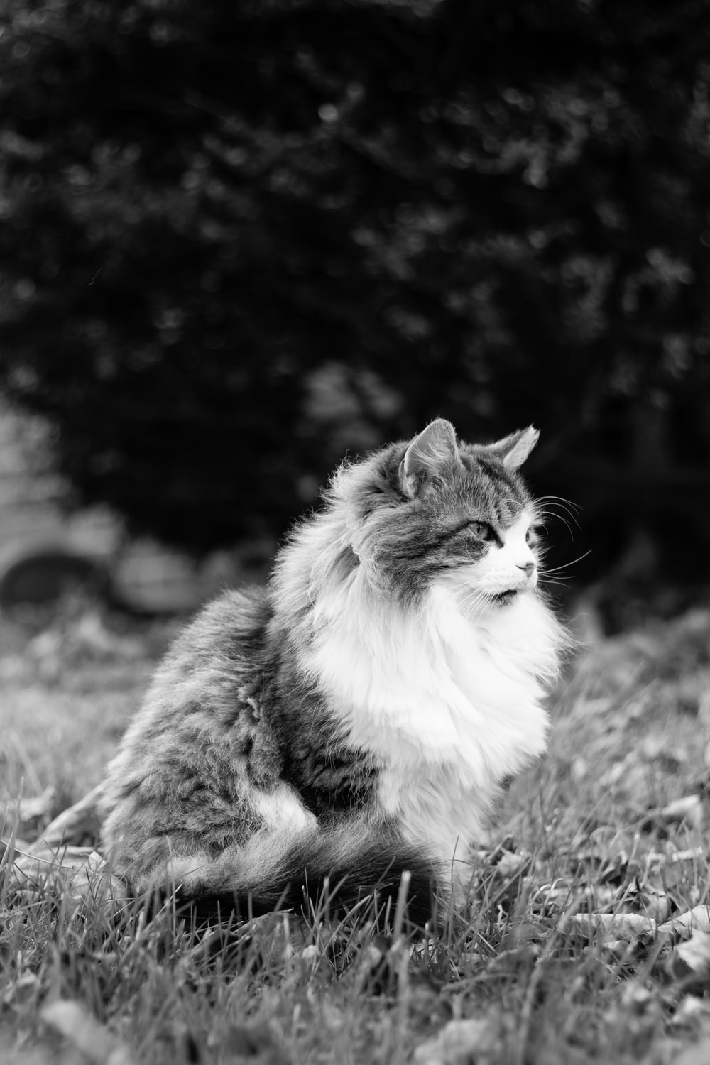 white and gray cat on grass