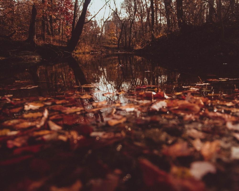 dried leaf on lake
