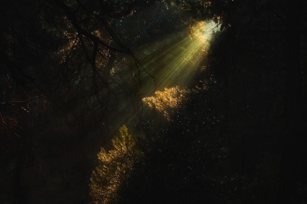 sunlight on trees