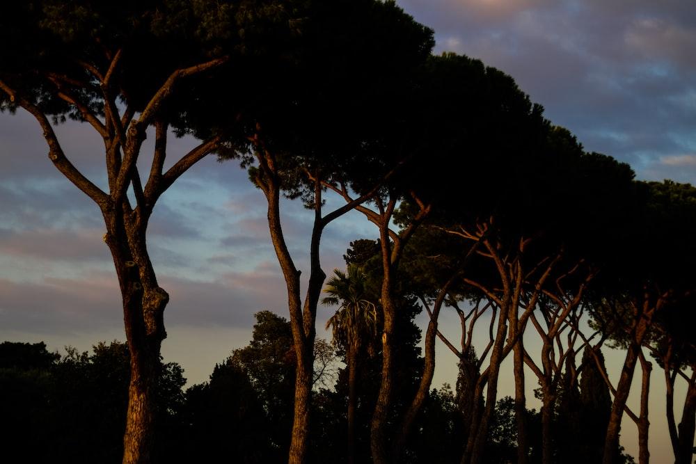 green trees scenery