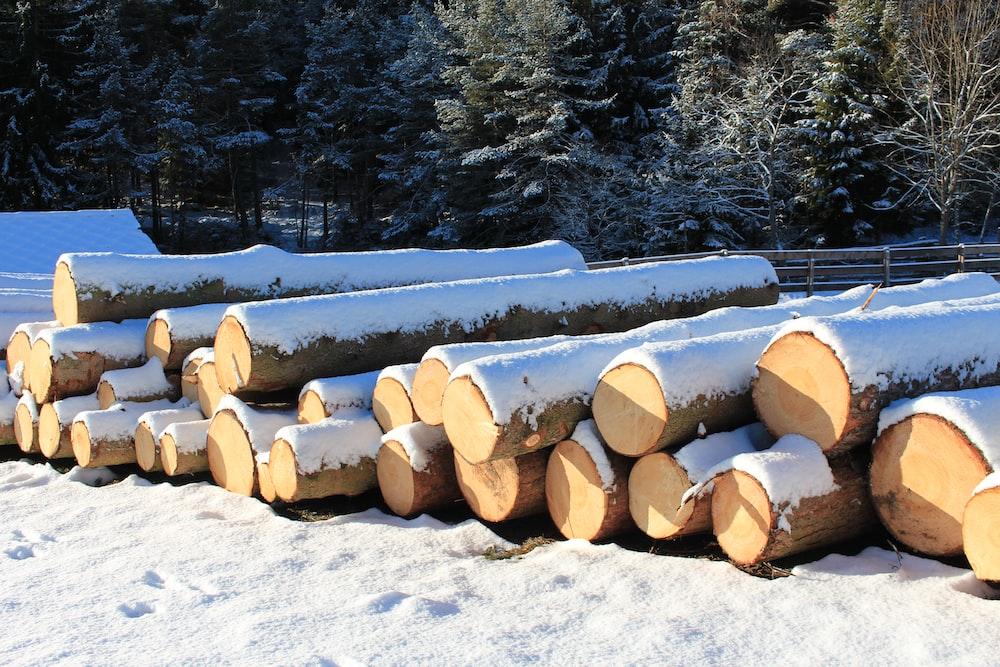 brown log trees