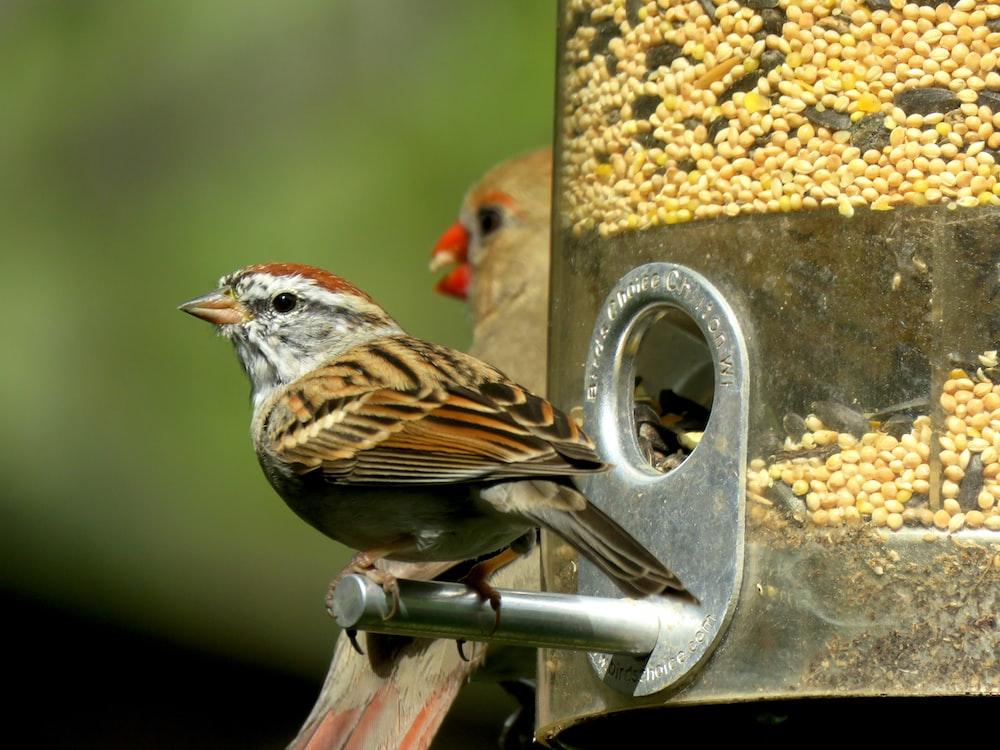 bird on pet feeder