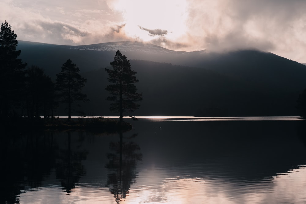reflections of trees on water