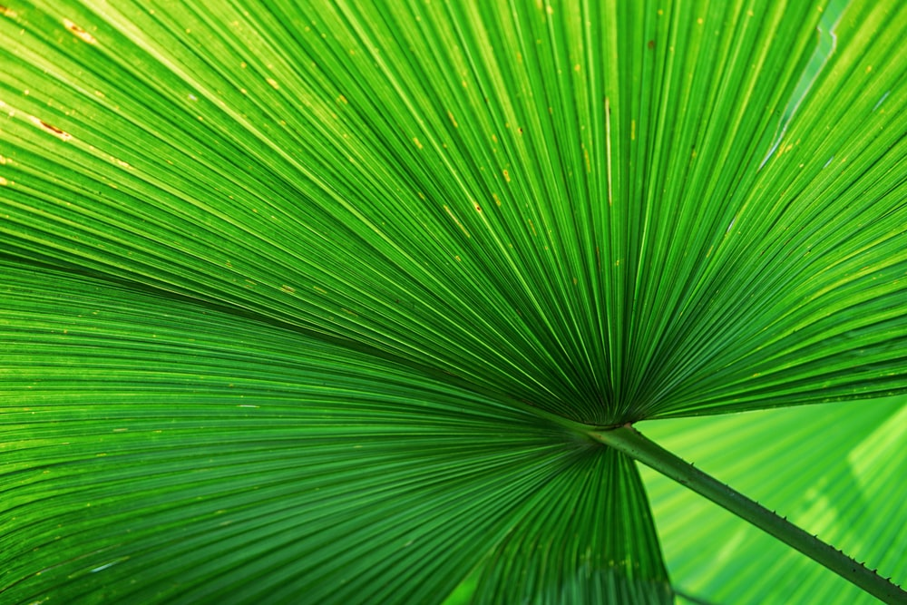 green palm plant leaf